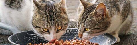Wahl des Katzenfutters